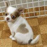 小型犬と中型犬の区別はどうなってる?