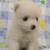 【小型犬】日本スピッツの性格と飼い方