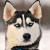 耳のしぐさでわかる愛犬の気持ちは?感情表現の方法