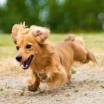 犬の癌(がん)の症状と発見方法は?部位別のご紹介