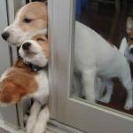 犬はマッサージしてもらうのが好き?治癒力を高める代替療法
