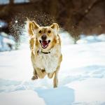 犬の去勢・避妊のメリット!唯一予防できる癌(がん)について
