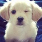 愛犬のワクチンの回数は?1年に1回じゃ多い!?