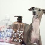 愛犬のアレルギーによるアトピー性皮膚炎の症状と治療方法は?