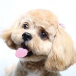 犬が鼻をなめるのはどんな時?鼻の表情から気持ちを読もう!