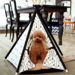 愛犬のハウスの大きさはどれくらい?ハウスとはクレート?ケージ?ベッド?
