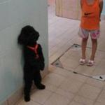 愛犬が子供嫌い!?子供と仲良くさせた方がいい?