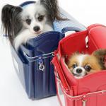 愛犬をバス、電車、新幹線に乗せるときの注意は?料金はどれくらい?