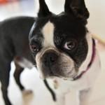 犬のしつけで吠える犬を叩くのは効果ある?ビシッとしつけるべき?