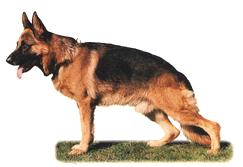 shepherd0
