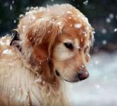 行方不明の愛犬のための全国動物保護センター