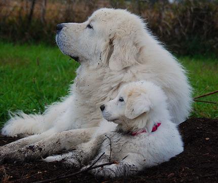 犬が地面やソファーや飼い主さんに顔や体をこすりつける7つの理由とは?