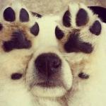 犬の去勢のメリットは?術後の犬は太る?!