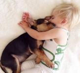 犬と一緒に寝るのはいけない飼育方法か?