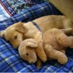犬を新しい寝床に慣れさせるためにはどうしつける?
