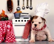 犬の気持ち | 同じ食事ばかりで飽きないの?