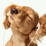 犬の気持ち | 音楽は理解できる?