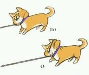 犬の気持ち | お散歩を嫌がる