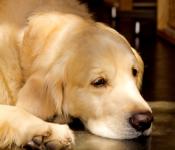 犬の気持ち | 緊張を和らげるカーミングシグナル