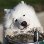 犬の食事の回数は年齢や状態によって変えるべき!
