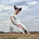 うちの犬は運動不足?犬の運動量の目安とは