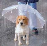 犬の気持ち | 雨の日も散歩に行くべきなの?