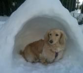 愛犬のハウスはどうしつける?入ろうとしないのはなぜ?