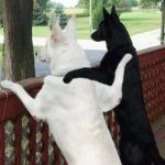 犬同士を仲良くさせる方法は?犬に会話をさせる?!