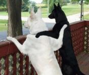 犬同士が仲良くなる方法は?あいさつのしかたで性格がわかる?!