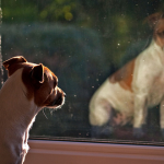 犬のストレスの原因は?ストレスサインから解消法まで全解明!