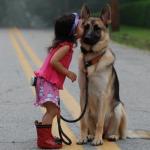 犬を飼うと人間の生活パターンを変える必要がある?