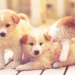 犬に友だちができない!子犬の成長段階とは?