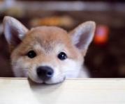 犬の気持ち | 赤ちゃんに吠えるのはやきもちなの?