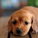犬が夜泣きをする!原因と対策は?