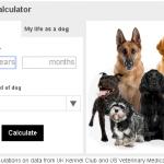 犬の年齢は犬種で違う!?人間年齢を計算してみよう!