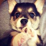 犬の気持ち   前足を上げるしぐさはどんな意味がある?