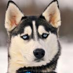 耳のしぐさでわかる犬の気持ちは?耳の病気やケア方法!
