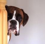 犬はどうして無駄吠えするの?犬の気持ちと対処法!