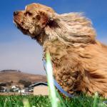 犬が匂いを嗅ぐ理由は?何を調べているの?