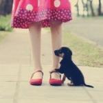 犬がお留守番中に吠えるのはなぜ?やめさせる方法!