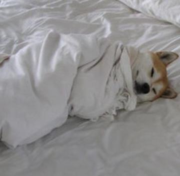 犬の体温は何度?熱の測り方と平熱は?発熱のサインと対処法!