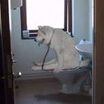 犬のトイレトレーニングが失敗!?しつけのポイントはココ!