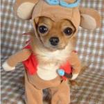 犬の洋服は必要?犬に服を着せるメリットは?