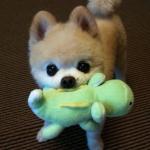 犬との遊び方で気をつけたい5つのルール!