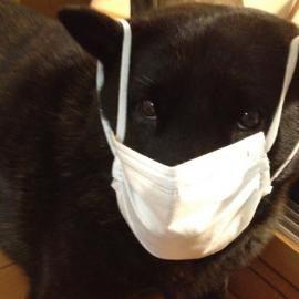 犬の鼻水や鼻血の症状!どんな病気が考えられる?