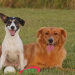 犬を飼う費用は?月、年間、生涯でどれくらいかかる?