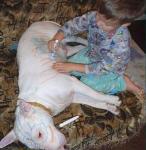犬の風邪の症状と対策法!【完全版】人間にうつるの?