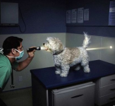 犬の健康チェックのしかた!おうちで簡単にできる方法♪
