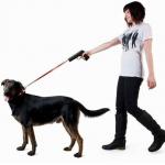 愛犬のリードの選び方は?伸縮?革製?ここがポイント!