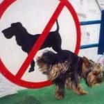 愛犬が室内でマーキングをする!原因と対処法は?